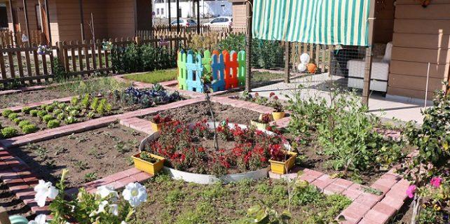 Emekliler bahçelerinde ilk hasadı yaptı